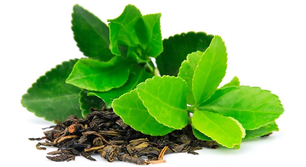 Картинки по запросу экстракт зеленого чая
