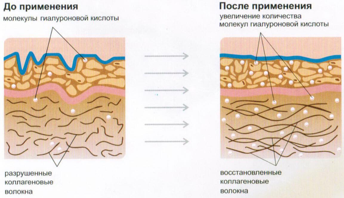 properties-of-collagen